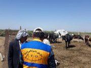 خدمت رسانی دامپزشکی خوزستان به مناطق سیل زده ادامه دارد