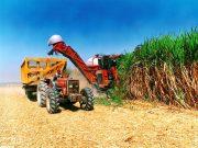 تولید بیش از ۳۷ هزار تن شکر در کشت و صنعت حکیم فارابی