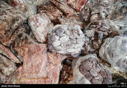 کشف ۲۵۰ کیلو گوشت فاسد که قرار بود دریک کبابی به خورد مردم داده شود