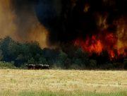 مهار آتشسوزی در بیشهزارهای گتوند