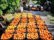 خوزستان ظرفیت تولید محصولات کشاورزی و صنعتی مورد نیاز ترکیه را دارد